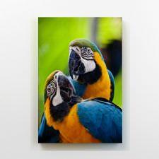 Papağanlar Tablosu
