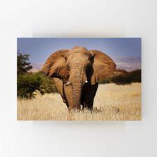 Afrika Safarisinde Fil Tablosu