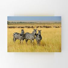 Safari Turundaki Zebralar Tablosu