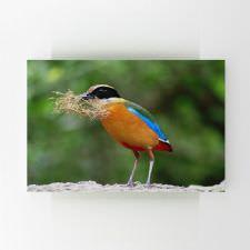 Yuvasına Kuru Ot Taşıyan Renkli Kuş Tablosu