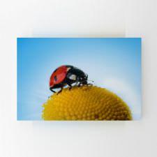 Çiçek Üzerinde Uğur Böceği Tablosu