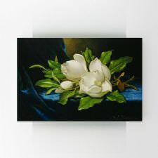 Martin Johnson Heade - Giant Magnolias on a Blue Velvet Cloth Tablosu