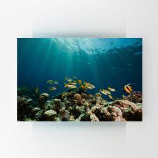Tropik Balıklar Tablosu