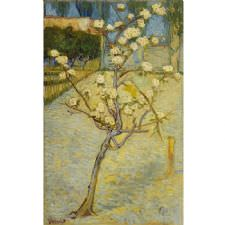 Vincent Van Gogh - Pear Tree in Blossom Tablosu