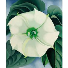 Georgia OKeeffe - White Flower Tablosu