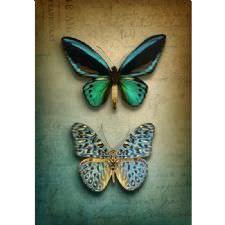 Kelebek Koleksiyonu Tablosu