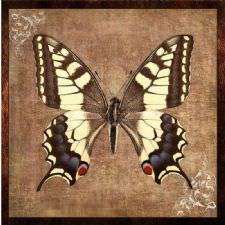 Eskitilmiş Kelebek Tablosu