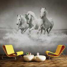 Beyaz Atlar Duvar Kağıdı