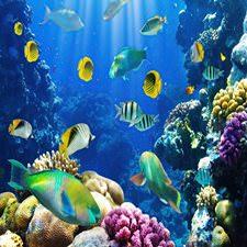 Tropikal Balıklar Akvaryumu Duvar Kağıdı