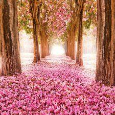 Pembe Çiçekli Yol Duvar Kağıdı