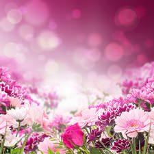 Pembe Çiçekler Duvar Kağıdı